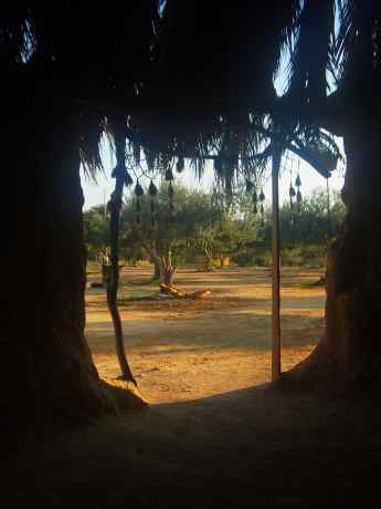 A view of the olive orchard from inside the Tuku
